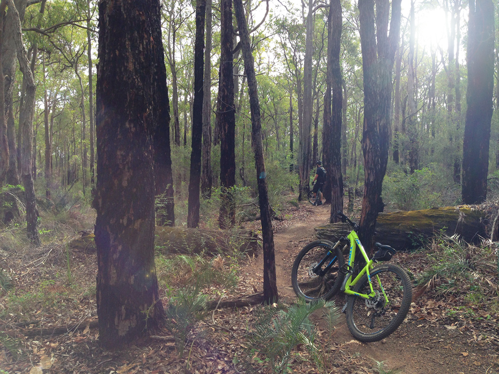 Mountain biking in the Perth hills